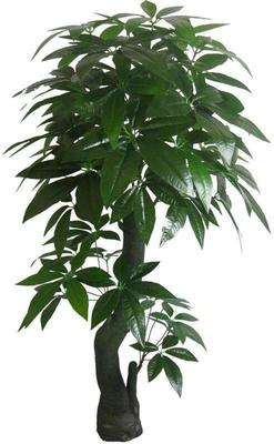 这是一张关于盆栽发财树的产品图片