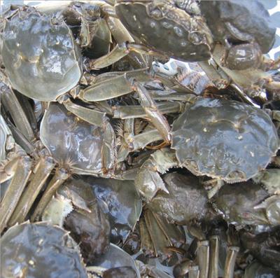 江苏省淮安市金湖县生态大闸蟹 2.0两以下 母蟹