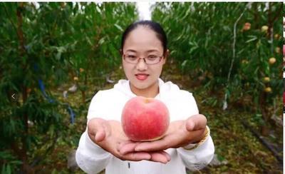 这是一张关于映霜红蜜桃 60mm以上 4两以上的产品图片