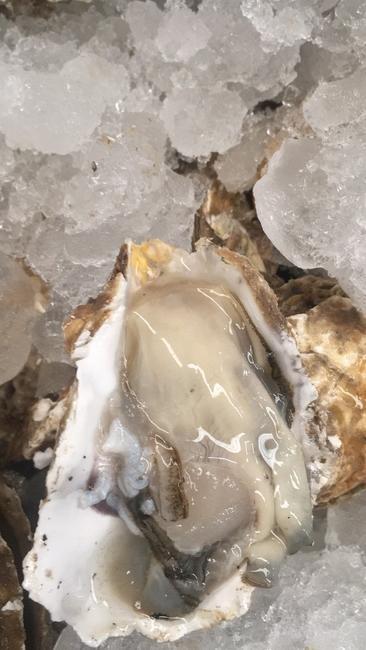 乳山牡蛎 人工殖养 1-2两/只