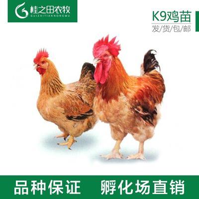 广西壮族自治区南宁市青秀区土鸡苗