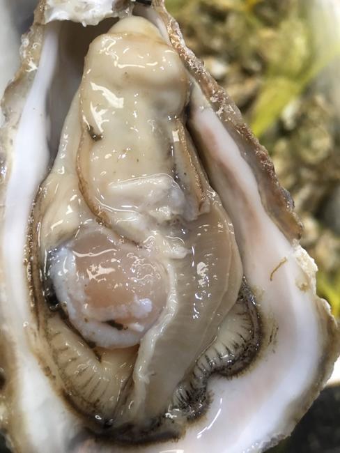 乳山牡蛎 1-2两/只 人工殖养