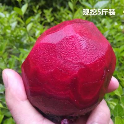 江苏省徐州市沛县甜菜根 15~20cm