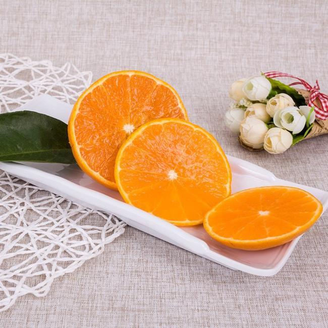 象山红美人柑橘苗 嫁接苗 1.5~2米
