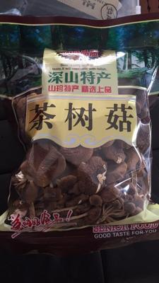福建省泉州市南安市广昌3号茶树菇 8~10cm 未开伞 干茶树菇