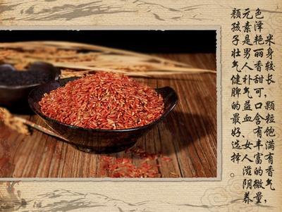 浙江省温州市鹿城区软红米