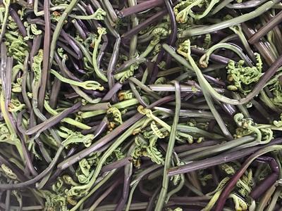 云南省保山市隆阳区野生蕨菜 鲜货