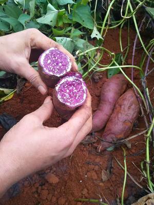云南省红河哈尼族彝族自治州建水县紫板薯 2-5两
