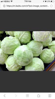 河北省张家口市张北县卷心包菜 2.5~3.0斤