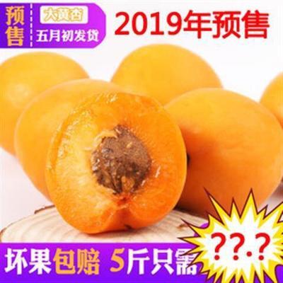 山东省临沂市蒙阴县金太阳杏 30-40mm
