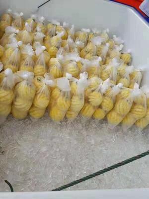 云南省西双版纳傣族自治州景洪市泰国小菠萝 1 - 1.5斤