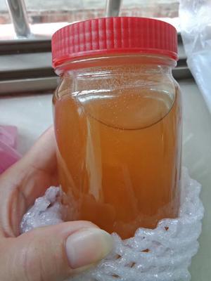 广东省江门市恩平市中华蜜蜂