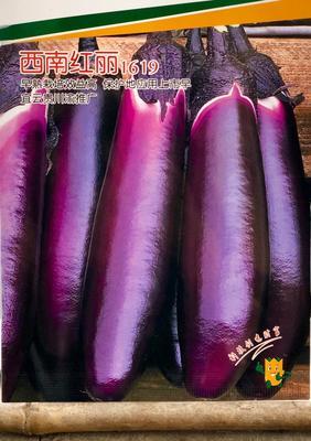 四川省成都市彭州市茄子种子 紫红茄子种子
