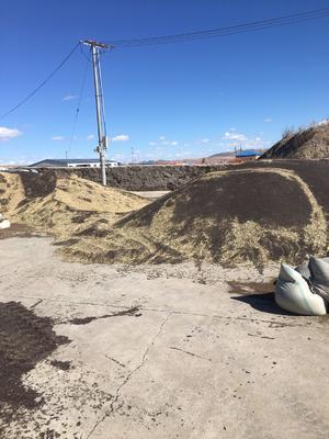 内蒙古自治区锡林郭勒盟二连浩特市油菜籽