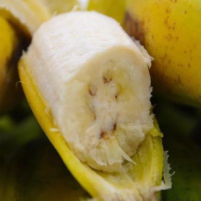 广东省珠海市斗门区芭蕉 八成熟