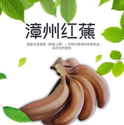 福建省漳州市南靖县红香蕉 八成熟