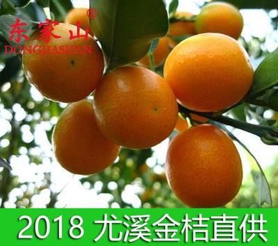 福建省三明市尤溪县尤溪金桔 3-4cm 1两以下
