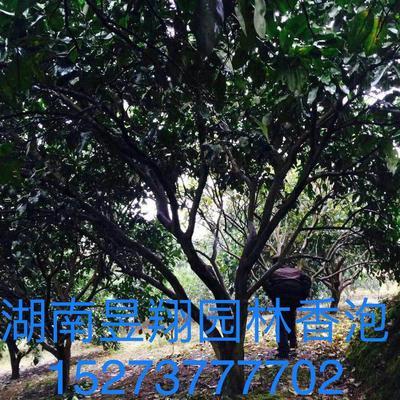 湖南省益阳市资阳区天香