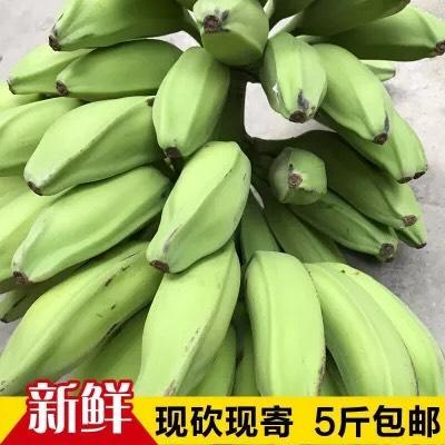 广东省茂名市高州市芭蕉 七成熟