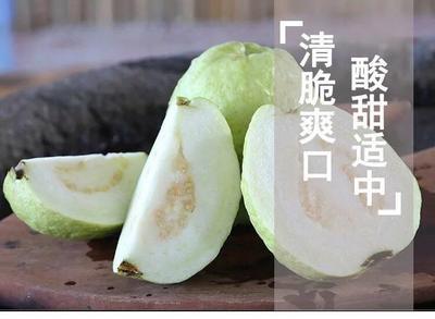 福建省漳州市南靖县白心番石榴 150-200克