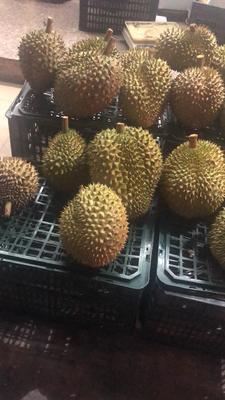 广西壮族自治区防城港市东兴市干荛榴莲 60 - 70%以上 4 - 5公斤