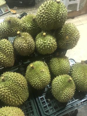干荛榴莲 80 - 90%以上 4 - 5公斤