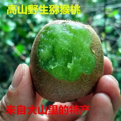 湖北省恩施土家族苗族自治州巴东县纯野生绿色有机猕猴桃 60克以下