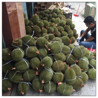 广西壮族自治区防城港市东兴市猫山王榴莲 80 - 90%以上 4 - 5公斤