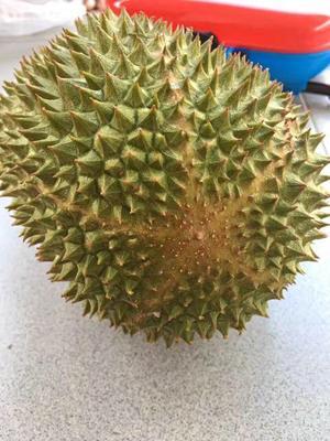 上海黄浦区猫山王榴莲D197 60 - 70%以上 2 - 3公斤