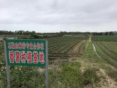 广东省汕尾市城区红薯淀粉