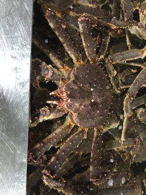 吉林省延边朝鲜族自治州珲春市帝王蟹 50.0两 公蟹