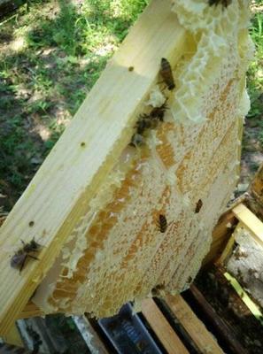 土蜂蜜 塑料瓶装 90%以上 2年以上
