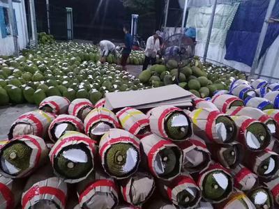 广西壮族自治区崇左市凭祥市越南菠萝蜜 15斤以上