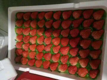 美国甜查理草莓 20克以上