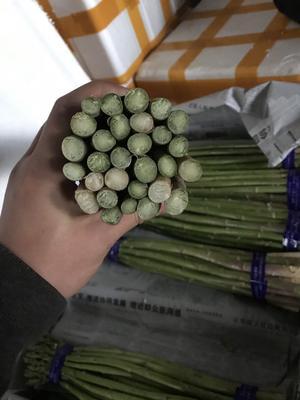 云南省昆明市呈贡区格兰特 28cm以上 10mm以上