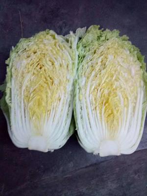 山东省枣庄市滕州市北京新三号白菜 3~6斤 净菜