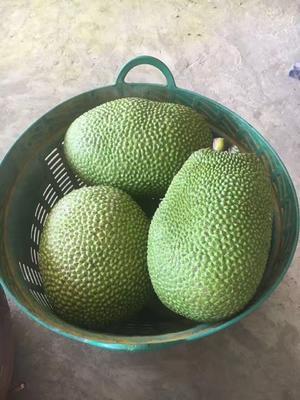 湖南省怀化市鹤城区红肉菠萝蜜 10斤以下