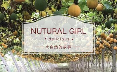 这是一张关于瓜蒌籽的产品图片