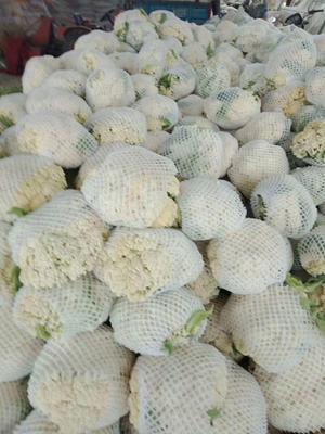 陕西省西安市阎良区白面青梗松花菜 松散 3~4斤 乳白色