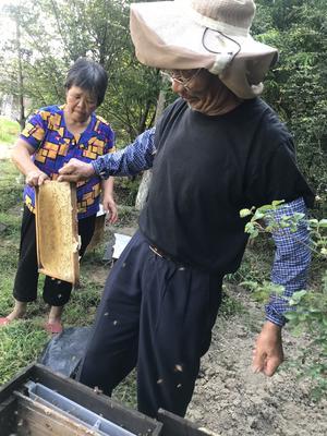 广东省深圳市宝安区蜂糖