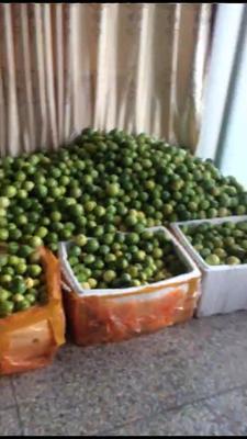这是一张关于黄金百香果 统货的产品图片