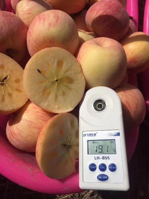 新疆维吾尔自治区巴音郭楞蒙古自治州库尔勒市冰糖心苹果 光果 表光 85mm以上