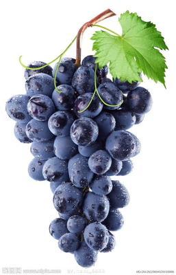 辽宁省锦州市北镇市巨峰葡萄 5%以下 1次果 0.8-1斤