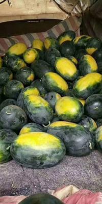 湖北省襄阳市宜城市黑美人西瓜 有籽 1茬 8成熟 7斤打底