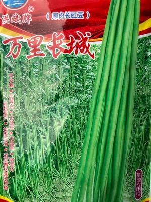 这是一张关于豇豆种子 原种的产品图片