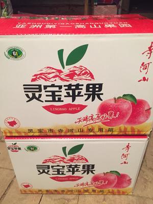河南省三门峡市灵宝市红富士苹果 纸袋 条红 75mm以上