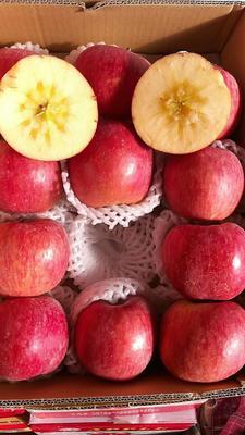 新疆维吾尔自治区乌鲁木齐市新市区红富士苹果 光果 条红 80mm以上