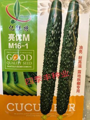 四川省成都市新都区黄瓜种子 ≥97% ≥97% 杂交种