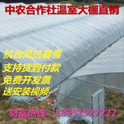 江苏省徐州市睢宁县钢管大棚