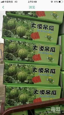 甘肃省武威市凉州区京欣西瓜 有籽 1茬 10成熟 4斤打底